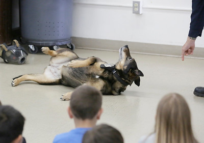 "Shaun Walker — The Times-Standard  Cali the Fire Dog demonstrates ""stop, drop, and roll"" during a presentation for second-graders at Washington Elementary School in Eureka on Friday."