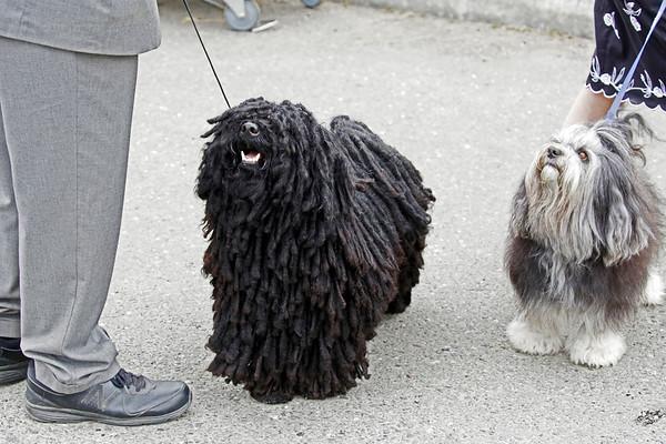 PHOTOS: Lost Coast Kennel Club Dog Show