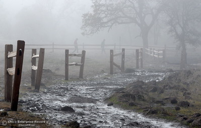 Muddy trails are seen in Upper Bidwell Park by Horseshoe Lake Monday Dec. 12, 2016. When weather creates trail conditions such as this, bicycles and horses are not allowed on the trails.  (Bill Husa -- Enterprise-Record)