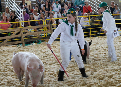 4-H members show their pigs during the swine show at the Silver Dollar Fair Wednesday May 24, 2017 at the Silver Dollar Fairgrounds in Chico, California. (Emily Bertolino -- Enterprise-Record)