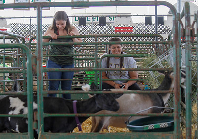 Emily Quiroga and Akilah Louis walk around the goat display at the Silver Dollar Fair Tuesday May 23, 2017 at the Fairgrounds in Chico, California.  (Emily Bertolino -- Enterprise-Record)
