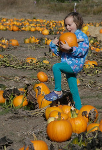 Shaun Walker — The Times-Standard  Penny Case, 6, of Fortuna selects pumpkins at Organic Matters Ranch on Wednesday afternoon. The pumpkin patch, located on Myrtle Avenue north of Freshwater, covers roughly 4 acres and has been there for about 7 years.