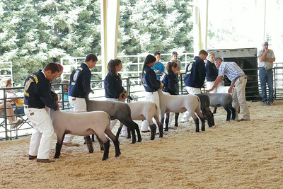140703 FFA SHEEP SHOWMANSHIP