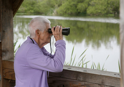 Shaun Walker — The Times-Standard  Barbara Manson of Eureka checks out a teal in the George Allen Marsh during the tour.