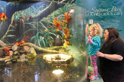 Shaun Walker — The Times-Standard  Lilah Pratt, 2, of Eureka and her mom Breanne look at a turtle and fish in an exhibit at the Sequoia Park Zoo in Eureka on Wednesday. The two and others were exploring after Stories and Stuffies, held the first Wednesday of every month from 11 a.m. to noon. It is designed to encourage early childhood literacy and provides a safe and fun community social and educational event. Children can bring their favorite stuffed animal, book, and blanket. Parents and young children join zoo education staff in the Secrets of the Forest are near the front gate for curated stories and quiet activities. The activity is included with paid admission.
