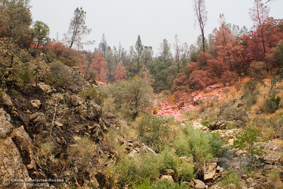 A line of pink fire retardant shows where Cal Fire Butte County worked to stop the Wall Fire spread Saturday July 8, 2017 in Oroville, California.  (Emily Bertolino -- Enterprise-Record)