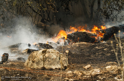 A fallen tree engulfed by flames as Cal Fire Butte County and other agencies work to contain the Wall Fire Saturday July 8, 2017 in Oroville, California.  (Emily Bertolino -- Enterprise-Record)