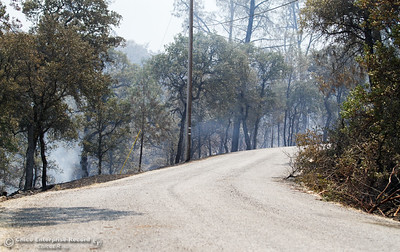 Cal Fire Butte County and other agencies work to contain the Wall Fire near Bangor; a wildfire that has grown to 2,000 acres at the time this picture was taken Saturday July 8, 2017 in Oroville, California.  (Emily Bertolino -- Enterprise-Record)