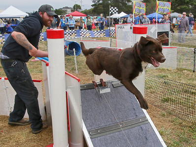 Shaun Walker — The Times-Standard  Lando chases a moving lure on a wire at Woofstock as owner Jared Kemp of McKinleyville eggs him on on the Eureka waterfront Saturday. The event featured contests, dog activities, vendors, food, music, and a parade.