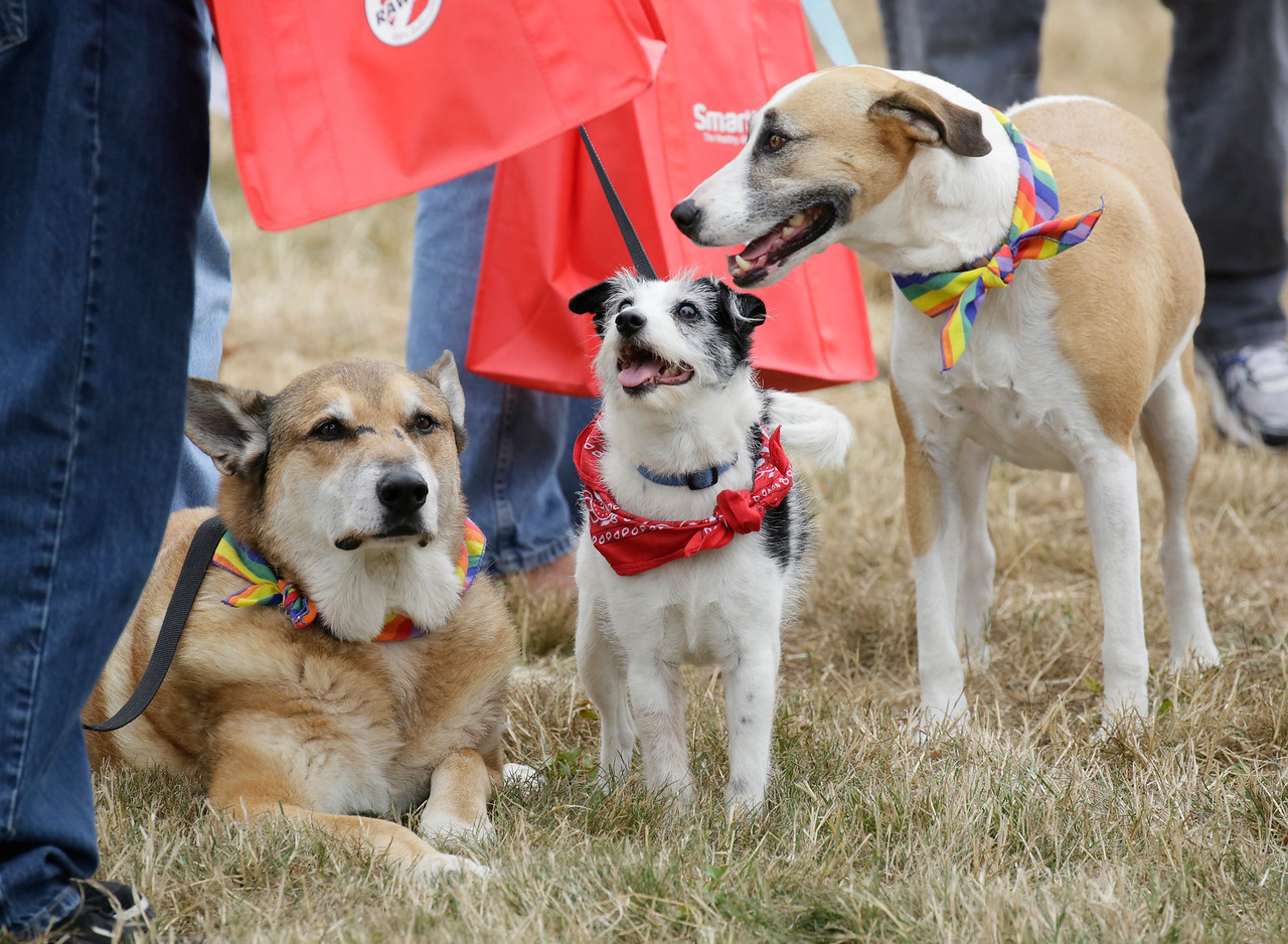 Shaun Walker — The Times-Standard  Three dogs relax next to each other at Woofstock.