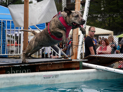 Shaun Walker — The Times-Standard  Maya, the dog of Jassen Pintado of Eureka, jumps into the water after a ball at Woofstock on the Eureka waterfront Saturday. The event featured contests, dog activities, vendors, food, music, and a parade.
