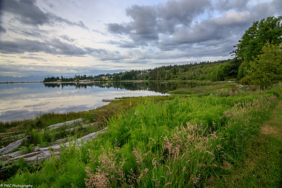 The waterfront at the Hatley Estate looking at the western part of the Esquimalt Lagoon.