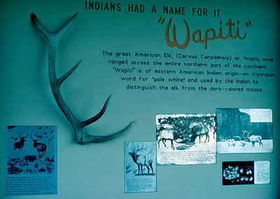 Wapiti Ranger Station