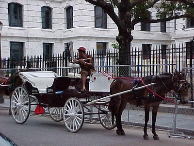 PICCOLO PLAYING BUGGY DRIVER (New Orleans, Sept 14, 2000)