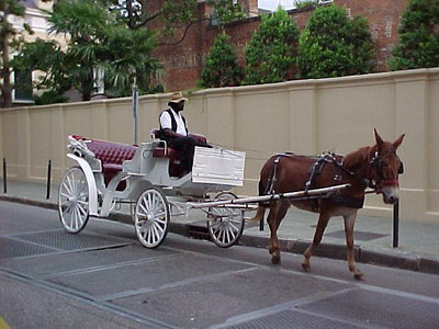 BUGGY (New Orleans, Sept 14, 2000)