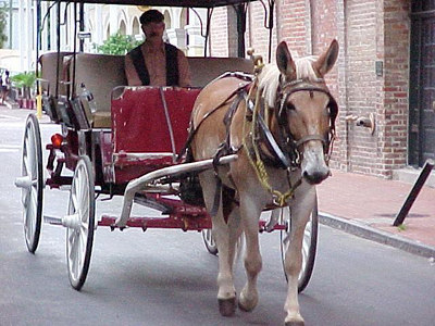 BUGGY (New Orleans, Sept 13, 2000)