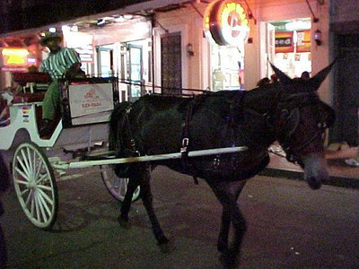 MULE BUGGY ON BOURBON STREET (New Orleans, Sept 14, 2000)