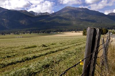 HAY FIELD -- Wallowa Valley between Joseph and Enterprise, Oregon (Sept 2004)