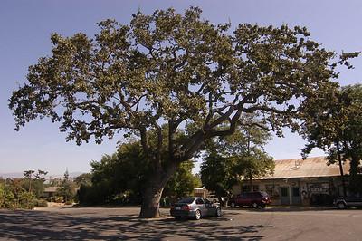 Santa Ynez, California (Sept 2006)