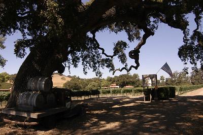 BLACKJACK VINEYARD: Alamo Pintado Road between Ballard and Los Olivos, California (Sept 2006).