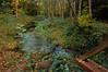 "This small ""feeder stream"" runs into Salmon Creek."