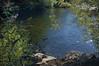 Salmon Creek (Oct 22, 2008)