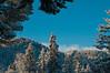 The Ridges of Oakridge