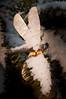 Snowed Under Dragon Fly