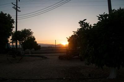 Sunrise In The Grove