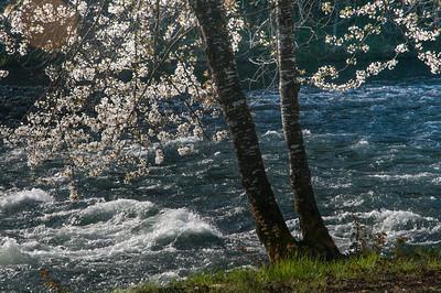 Blossums