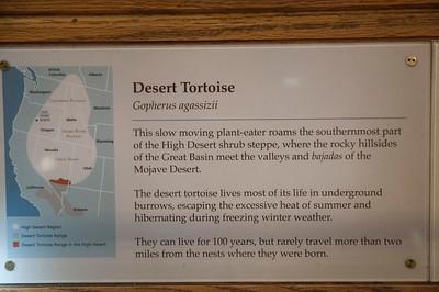 Desert Toroise
