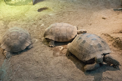 Turtles To Me