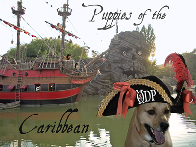 pups of caribbean poster for event