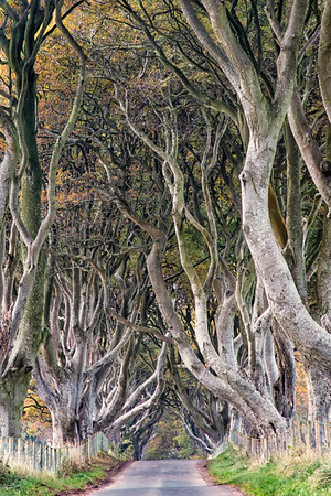 Dark Hedges 3637