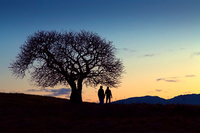 Poet's Tree 6499