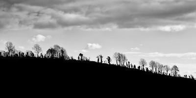 Senty trees on a ridge in Ireland