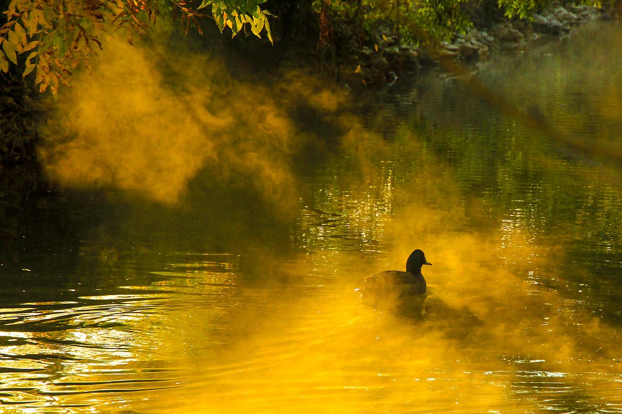 Autumn Duck     ................................................................      Bruno Suignard
