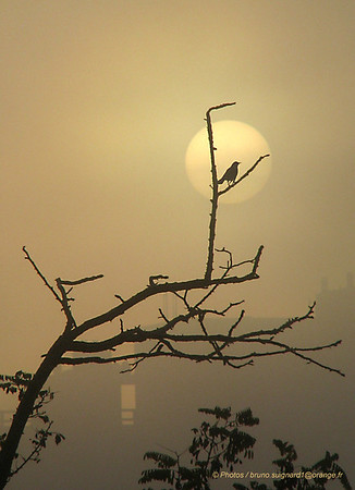 foggy sunrise   - pxret