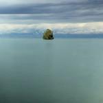 Ile de Peilz -  Un arbre sur le lac (Léman)  - suisse-europe