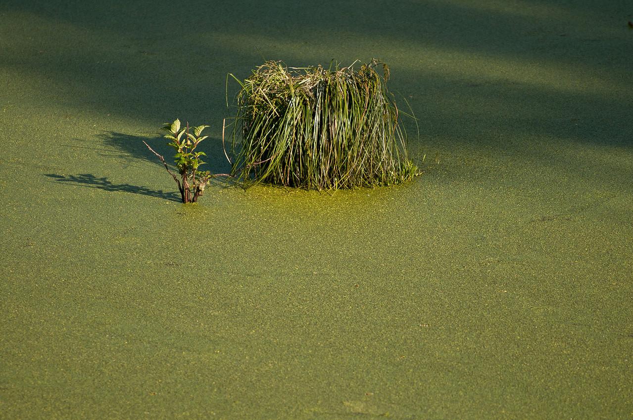 Swamp Clump