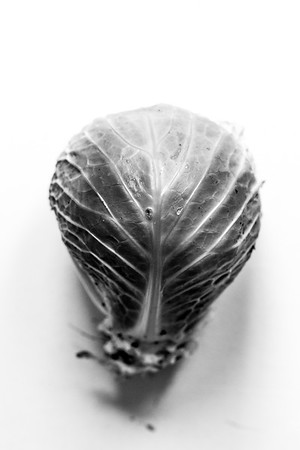 ARTY CABBAGE