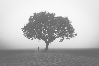 Man and a Tree