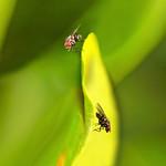 Flies  by Bruno SUIGNARD