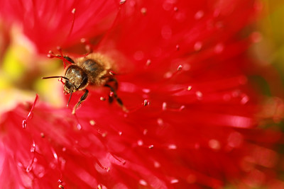 Bee and Magnetic colours