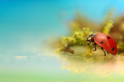 Ladybird  -  3