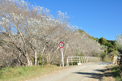 Dirt road, Raglan to Kawhia. East coast Norh Island