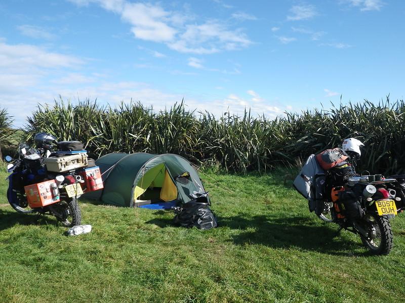 Penguin camp
