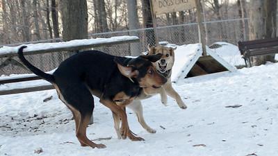 maddie, sammy coonhound; fangs snow ossining
