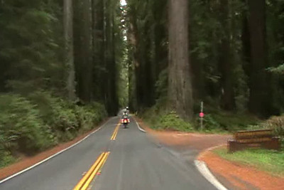Redwood Highway. California 3/10/11