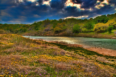 Pedernales River and Spring Wildflowers